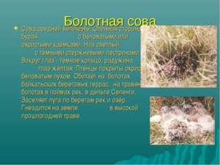 Болотная сова Сова средней величины. Спинная сторона бурая с беловатыми или о
