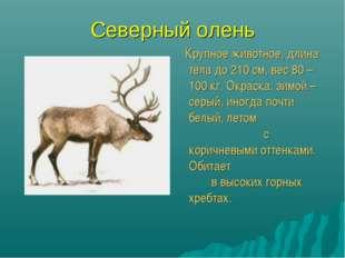 Северный олень Крупное животное, длина тела до 210 см, вес 80 – 100 кг. Окрас