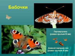 Бабочки Перламутровка (размах крыльев 50 мм) Дневной павлиний глаз (размах кр