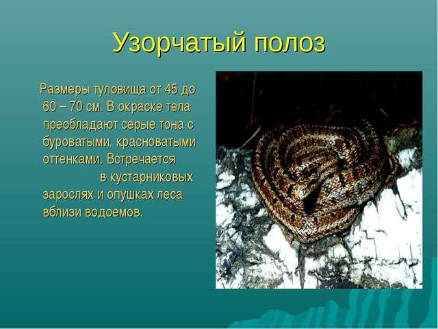 Узорчатый полоз Размеры туловища от 45 до 60 – 70 см. В окраске тела преоблад...