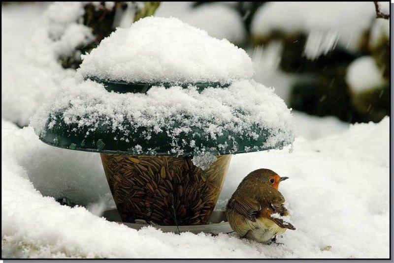 C:\Users\lenovo\Desktop\Зимующие птицы\ecba14d509a4.jpg