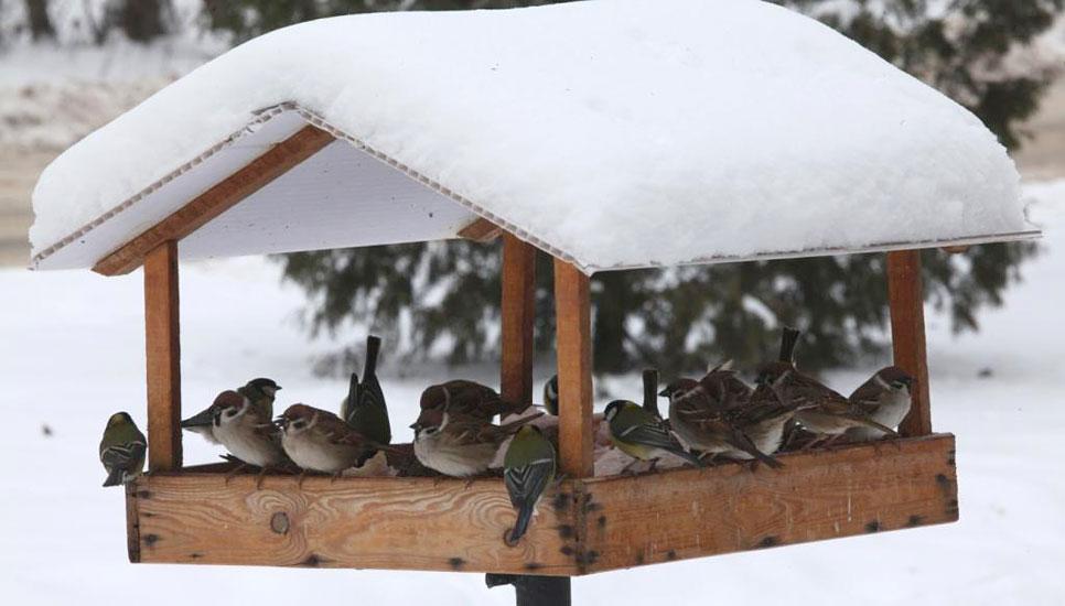 C:\Users\lenovo\Desktop\Зимующие птицы\2013-01-15-6.jpg
