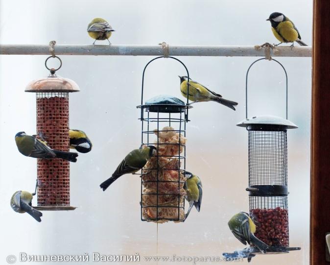 C:\Users\lenovo\Desktop\Зимующие птицы\birds.jpg