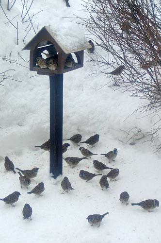 C:\Users\lenovo\Desktop\Зимующие птицы\Ptitsy.jpg