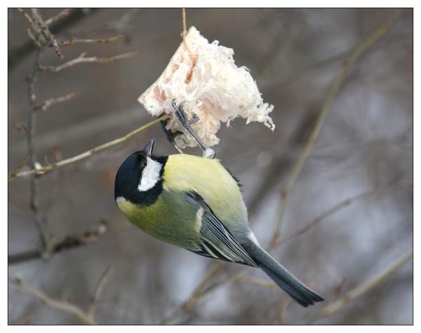 C:\Users\lenovo\Desktop\Зимующие птицы\image8648000.jpg