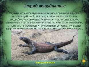Отряд Черепахи Отряд пресмыкающихся, существующий на протяжении более 220 мил