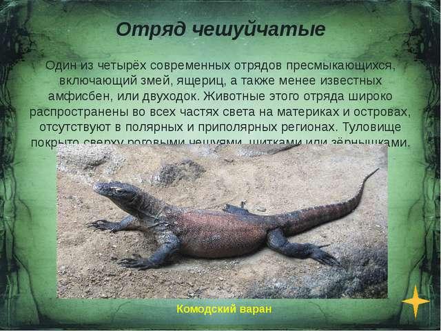 Отряд Черепахи Отряд пресмыкающихся, существующий на протяжении более 220 мил...