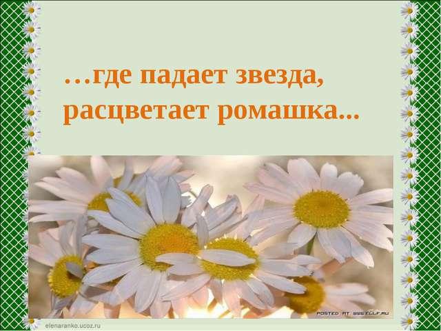 …где падает звезда, расцветает ромашка...
