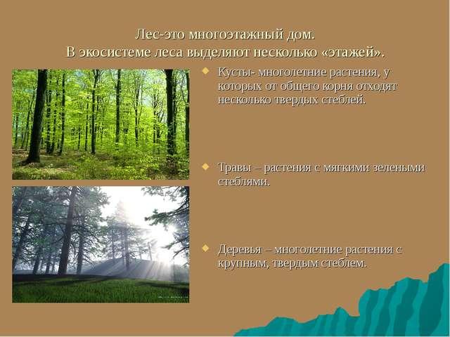 Лес-это многоэтажный дом. В экосистеме леса выделяют несколько «этажей». Куст...