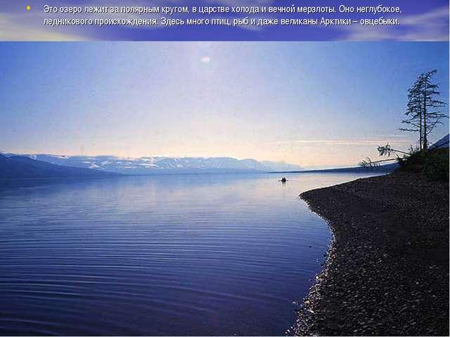 Это озеро лежит за полярным кругом, в царстве холода и вечной мерзлоты. Оно н...