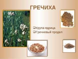 ГРЕЧИХА Крупа-ядрица Гречневый продел