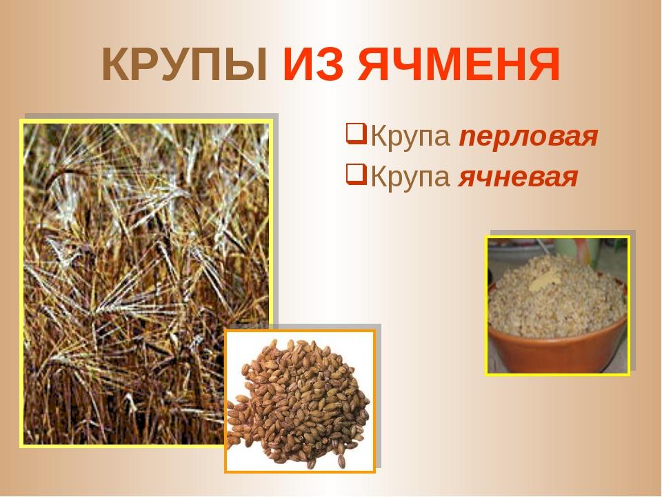 Из каких растений можно сварить ячневую кашу