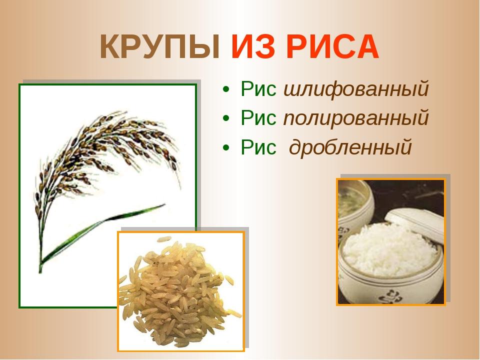 КРУПЫ ИЗ РИСА Рис шлифованный Рис полированный Рис дробленный
