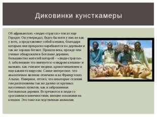 Диковинки кунсткамеры Об африканских «людях-страусах» писал еще Геродот. Он у