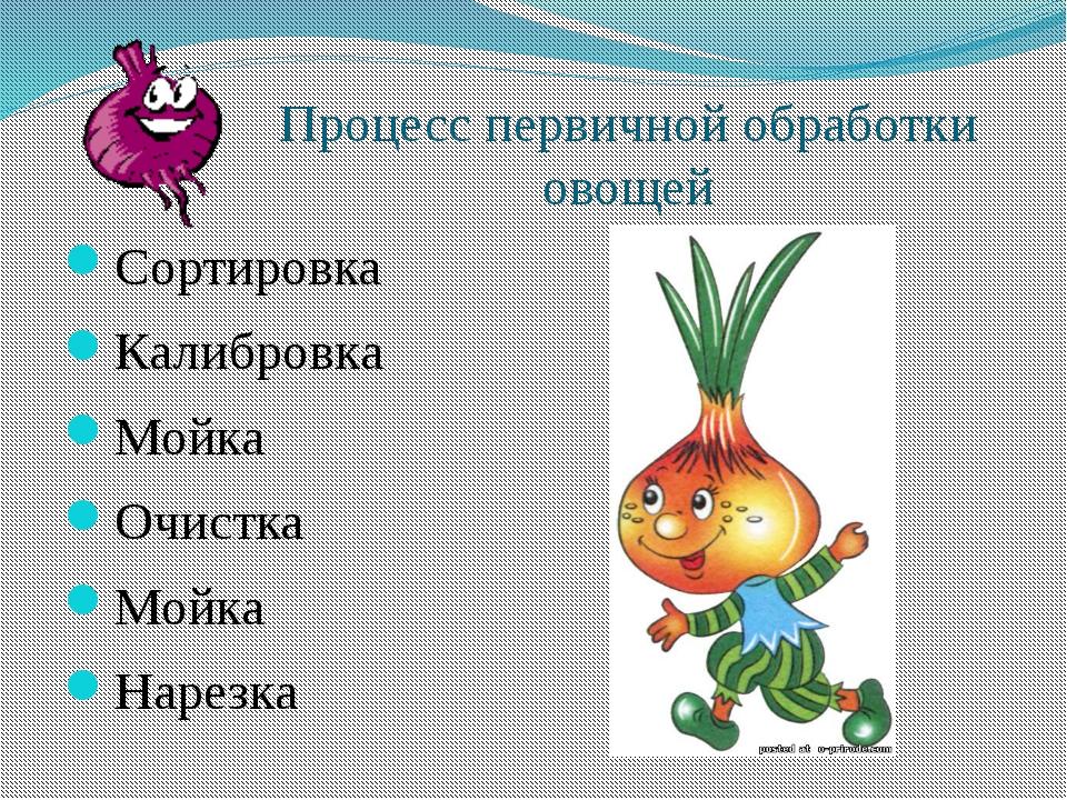 Процесс первичной обработки овощей Сортировка Калибровка Мойка Очистка Мойка...