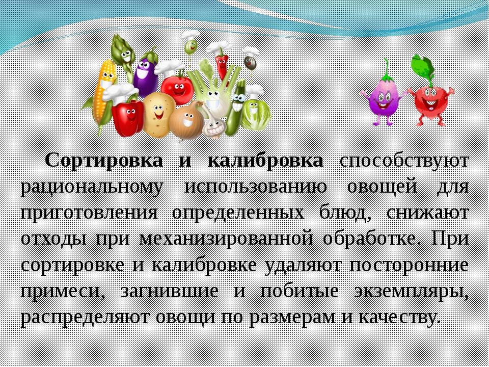 Сортировка и калибровка способствуют рациональному использованию овощей для п...