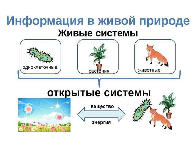 Информация в живой природе Живые системы открытые системы вещество энергия ра...
