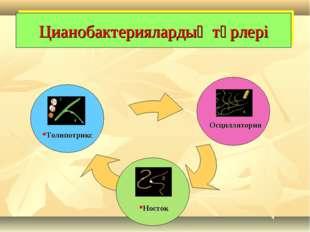 Цианобактериялардың түрлері Носток Осциллятория Толипотрикс
