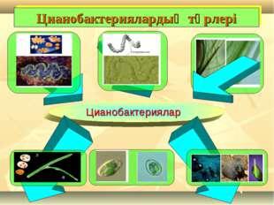 Цианобактериялардың түрлері Цианобактериялар