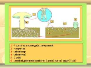 6 5 4 3 2 1 1 – қалпақша астындағы спорангий 2 – споралар 3 – жіпшелер 4 – жі