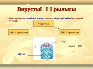 Вирустың құрылысы Вирус екі түрлі нуклеин қышқылынан, сыртында нәруызды қабығ