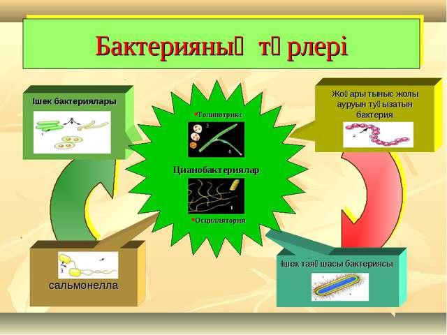 Бактерияның түрлері Ішек бактериялары Жоғары тыныс жолы ауруын туғызатын бакт...