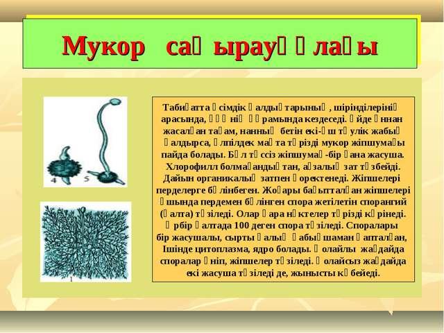 Мукор саңырауқұлағы Табиғатта өсімдік қалдықтарының, шірінділерінің арасында,...