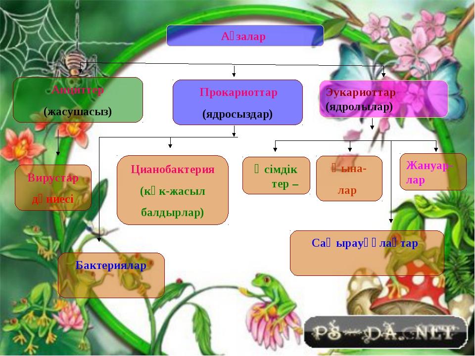 Ағзалар Анциттер (жасушасыз) Прокариоттар (ядросыздар) Эукариоттар (ядролылар...