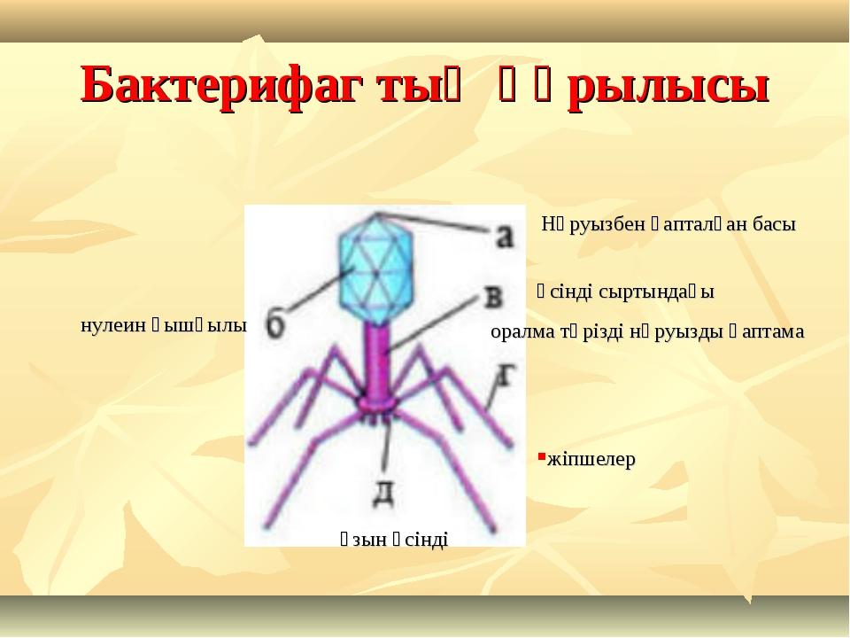 Бактерифаг тың құрылысы Нәруызбен қапталған басы нулеин қышқылы өсінді сыртын...