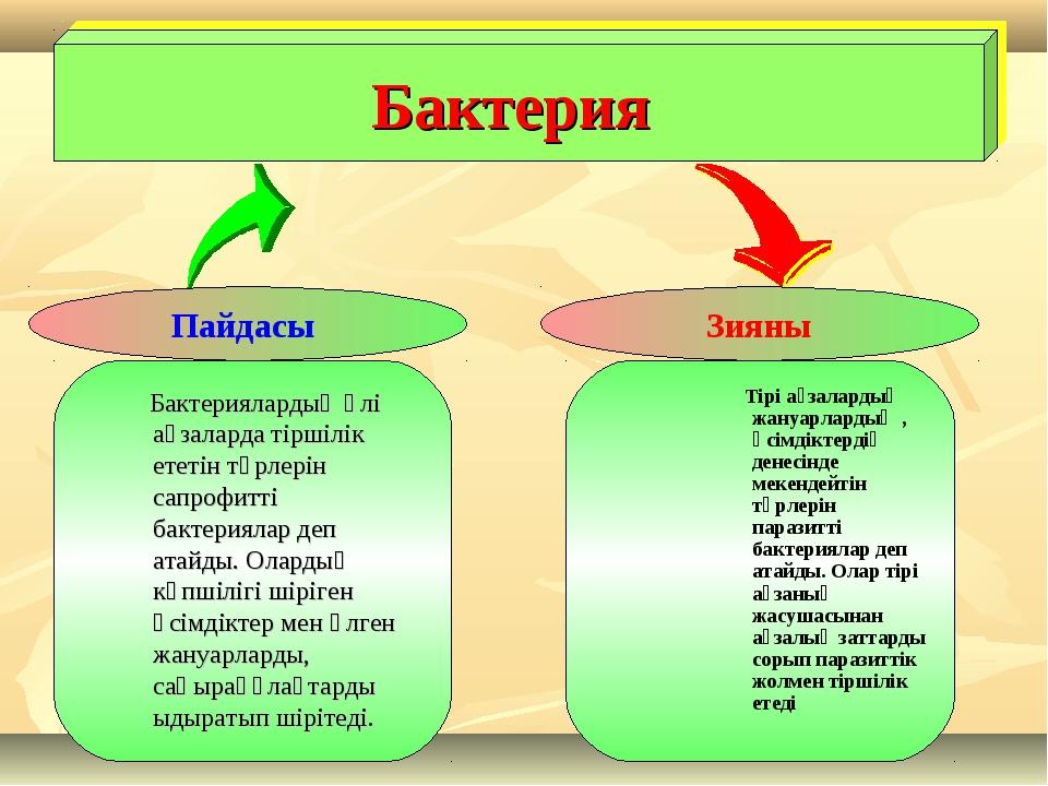 Бактерия Пайдасы Зияны Бактериялардың өлі ағзаларда тіршілік ететін түрлерін...