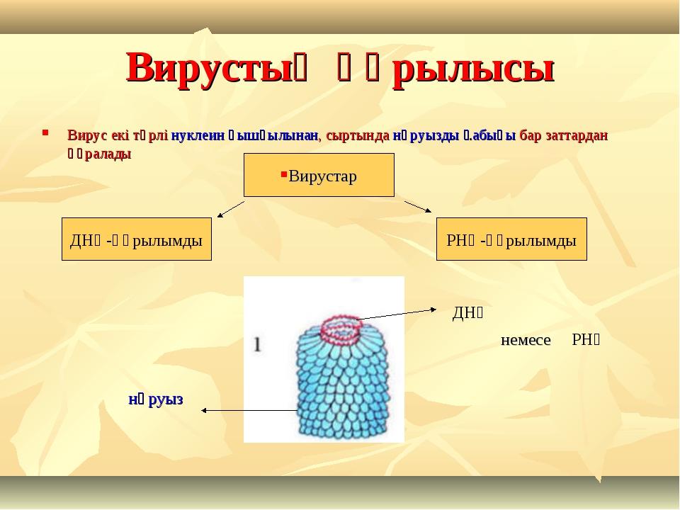 Вирустың құрылысы Вирус екі түрлі нуклеин қышқылынан, сыртында нәруызды қабығ...