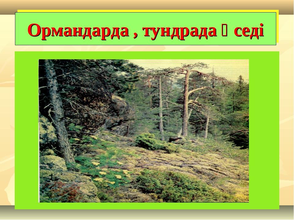 Ормандарда , тундрада өседі
