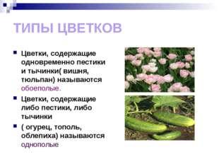 ТИПЫ ЦВЕТКОВ Цветки, содержащие одновременно пестики и тычинки( вишня, тюльпа