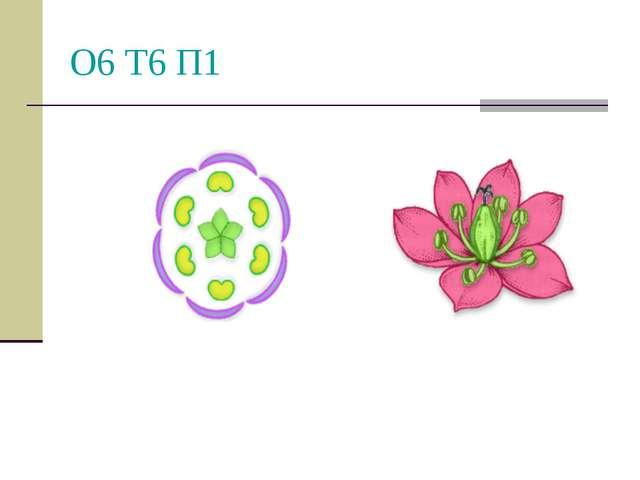 О6 Т6 П1