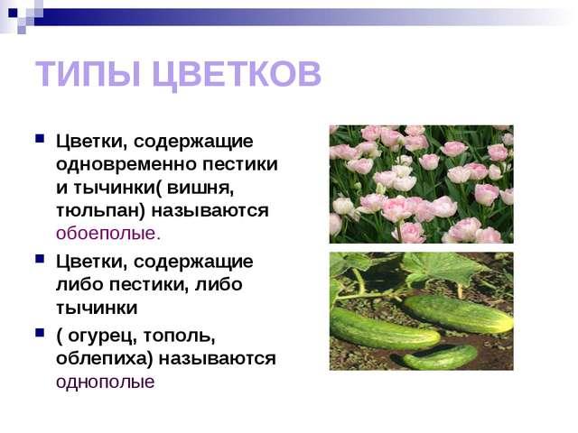 ТИПЫ ЦВЕТКОВ Цветки, содержащие одновременно пестики и тычинки( вишня, тюльпа...