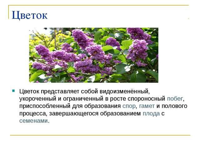 Цветок Цветок представляет собой видоизменённый, укороченный и ограниченный в...