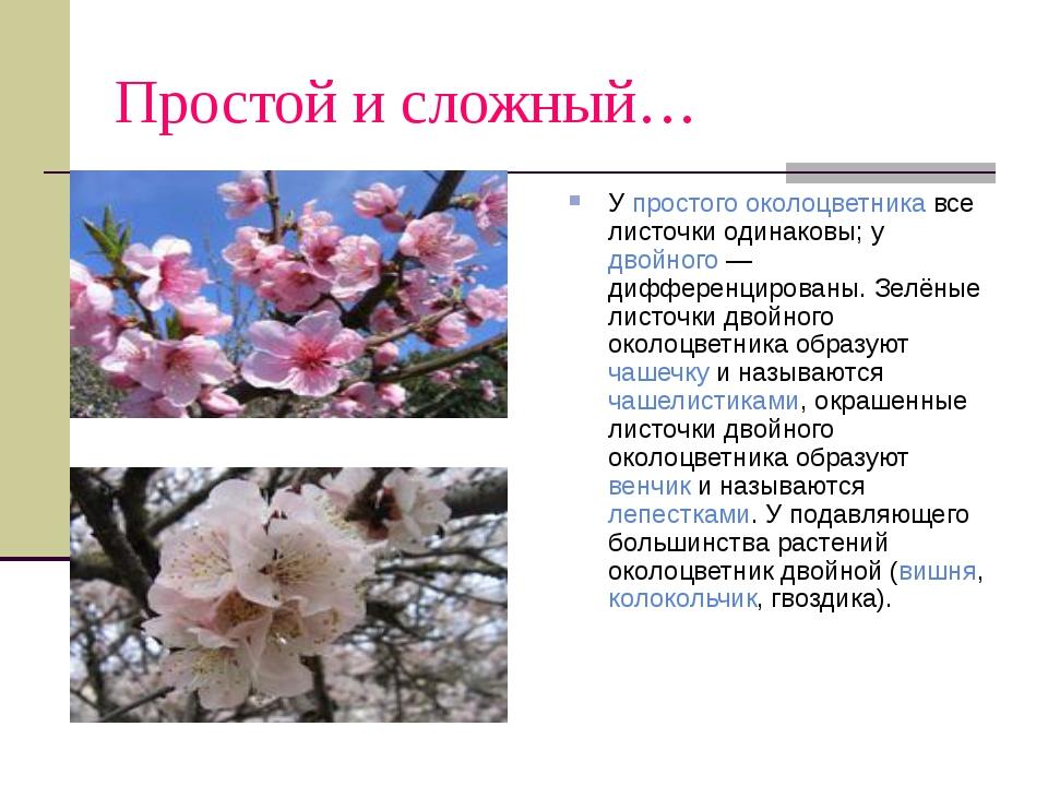 Простой и сложный… У простого околоцветника все листочки одинаковы; у двойног...