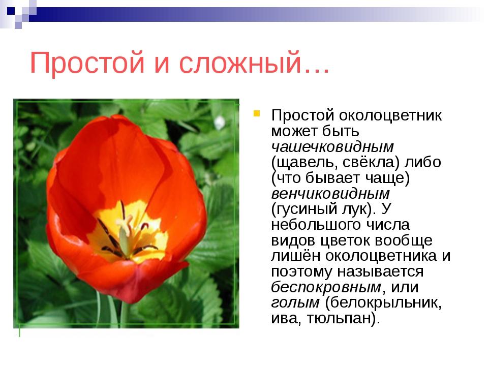 Простой и сложный… Простой околоцветник может быть чашечковидным (щавель, свё...