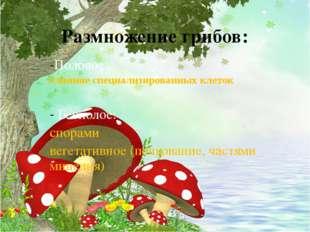 Размножение грибов: Половое: слияние специализированных клеток Бесполое: спор