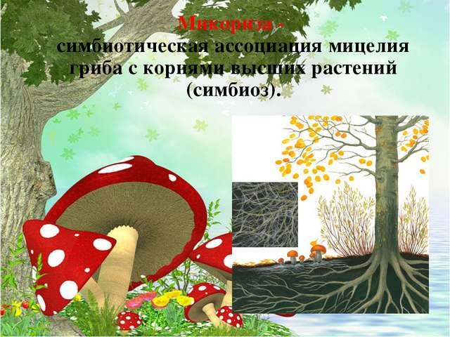 Микориза - симбиотическая ассоциация мицелия гриба с корнями высших растений...