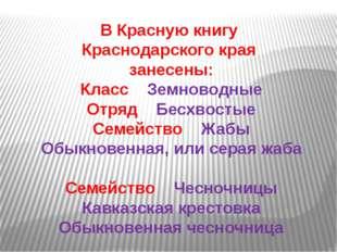 В Красную книгу Краснодарского края занесены: Класс Земноводные Отряд Бесхвос