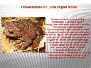 Является самой крупной жабой, обитающей в Евразии. Тело у представителей вид