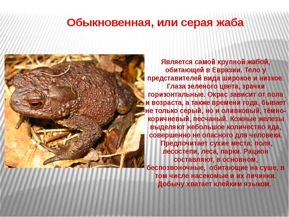 Является самой крупной жабой, обитающей в Евразии. Тело у представителей вид...