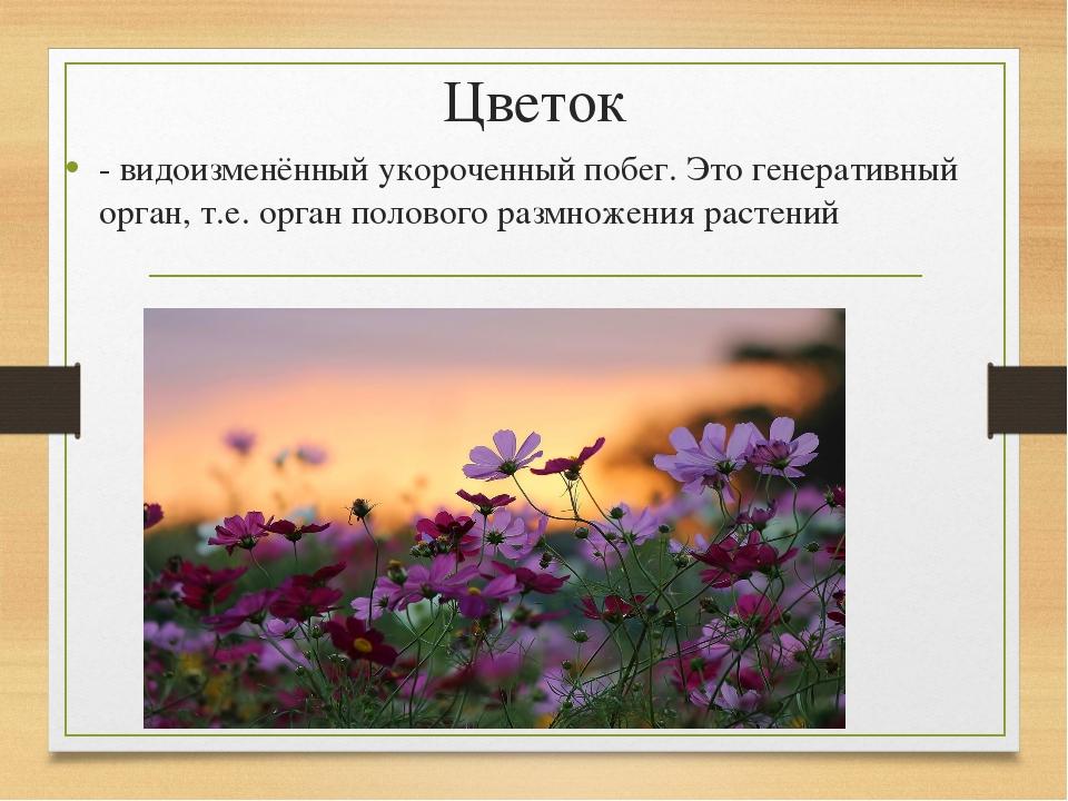 Цветок - видоизменённый укороченный побег. Это генеративный орган, т.е. орган...