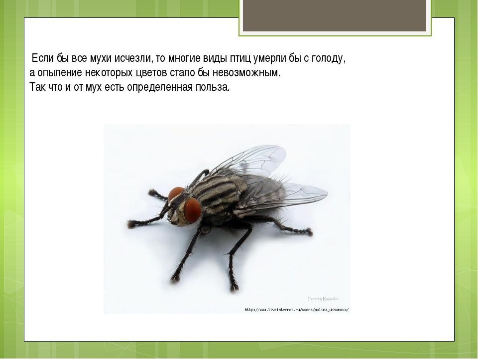 Если бы все мухи исчезли, то многие виды птиц умерли бы с голоду, а опыление...
