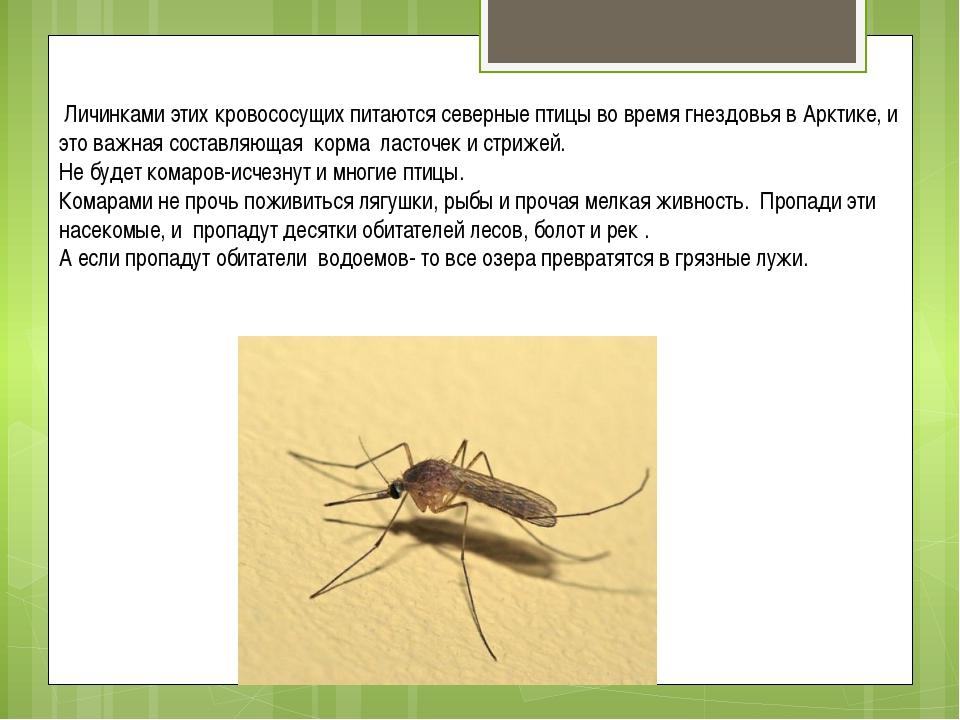 чем питаются личинки комаров помощь