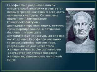 Герофил был родоначальником описательной анатомии и считается первым греком,