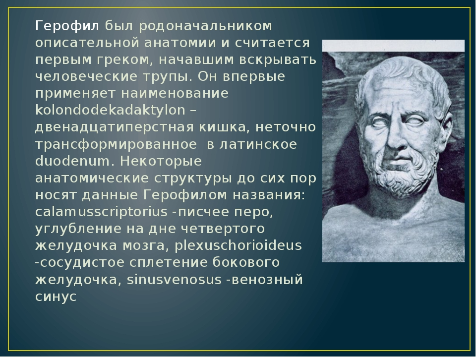 Герофил был родоначальником описательной анатомии и считается первым греком,...