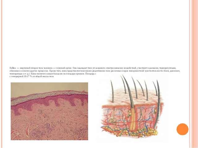Ко́жа— наружный покров тела человека— сложныйорган. Она защищает тело от...