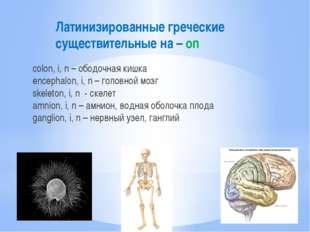 Латинизированные греческие существительные на – on colon, i, n – ободочная ки